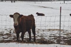 Stuart Family Farm