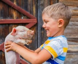 bigstock-Boy-with-piglet-89152214.jpg