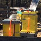 SBC apiary