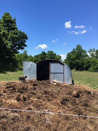 Pigs and Soleil.jpg